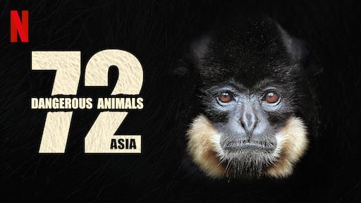 72 Dangerous Animals: Asia